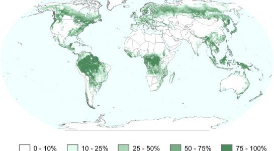 MODIS forest